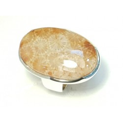 Ring Fossil coral